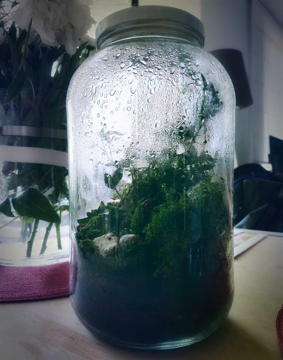 las zamknięty w szklanym słoiku