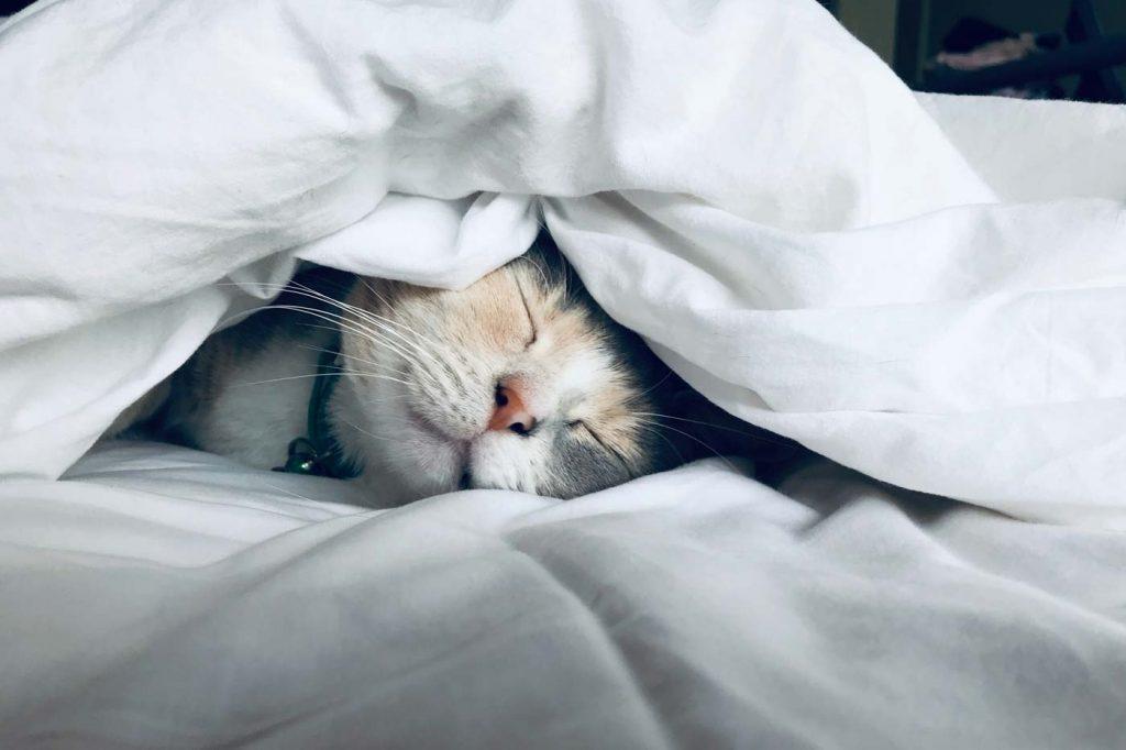 Kot śpiący pod kołdrą