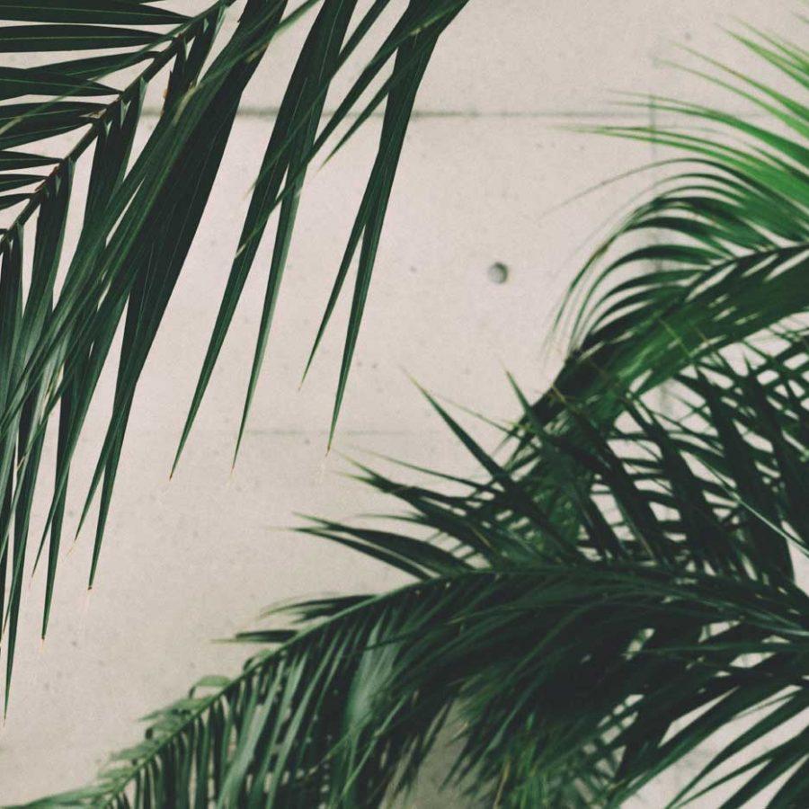 Palma królewska