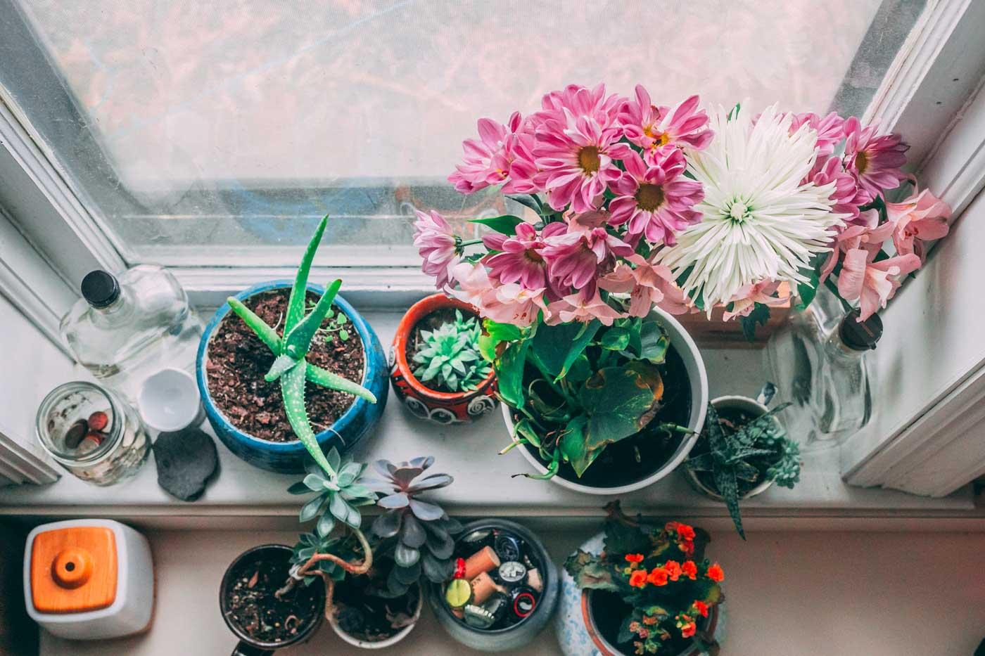 kilka kwiatków doniczkowych postawionych na parapecie