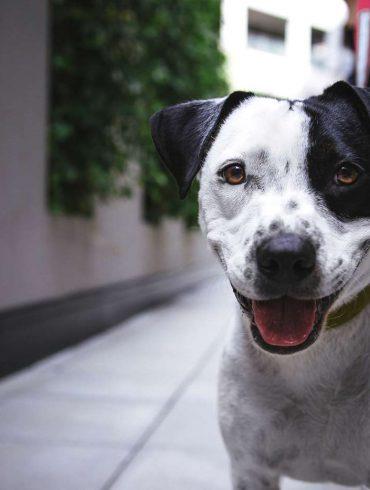 Szczęśliwy pies na spacerze